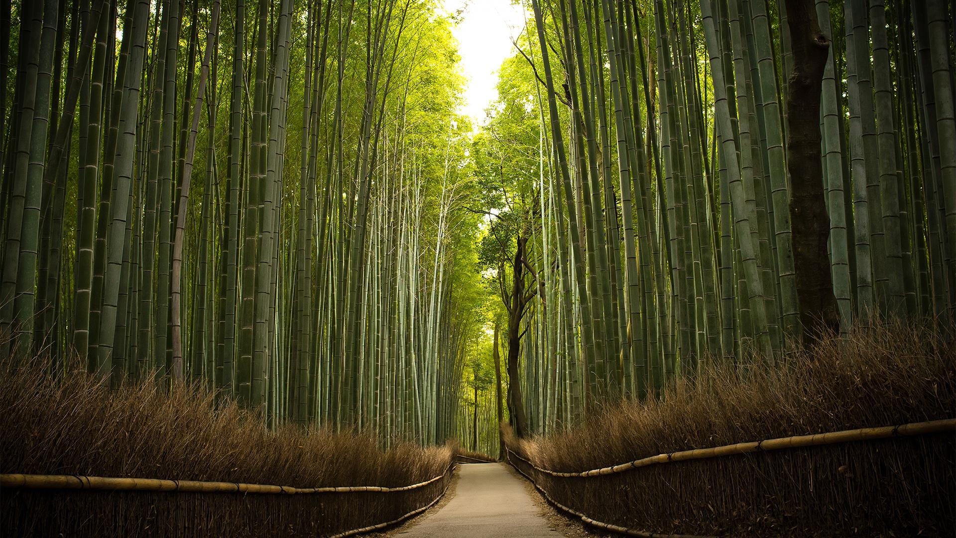 Bambusmets